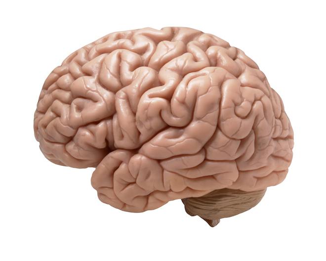 brain-real-looking